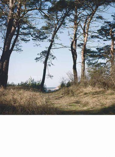 andpk046 KüstenwaldIII_Deinzer_990
