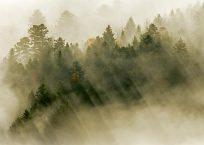 PK231_Nebel im Licht_990