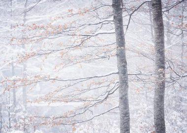PK083_Wintertraum_Bofan_a_s_isocoated_kon