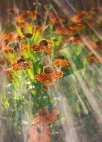 PK593_Dancing_Flowers_990