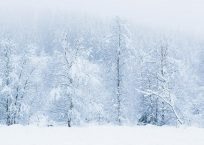 PK318_Winterwald_990
